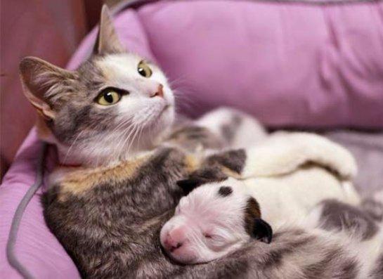 Кошка стала мамой для новорожденного щенка