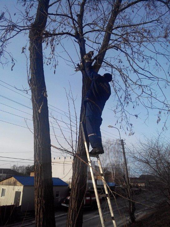 Под Киевом спасли кота, который не мог слезть с дерева