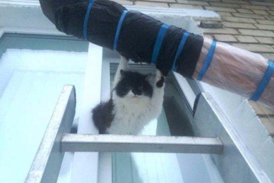В Озёрске помогли котёнку, который застрял в окне