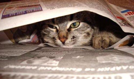 История про кошку-читательницу