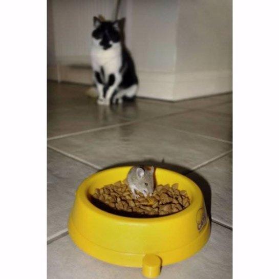 Кот, который испугался мышь