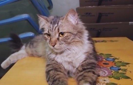 Необычное путешествие кота Магеллана