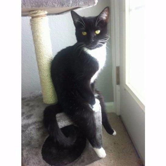 Кот, который умеет сидеть как человек