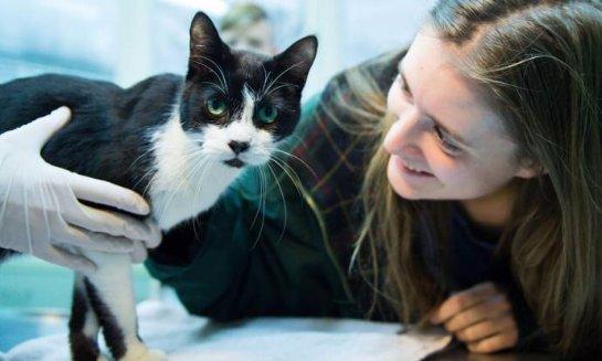 В Берлине нашелся кот, который пропал семь лет назад
