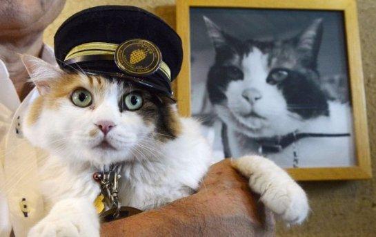 Кошка Нитама получила ответственную должность