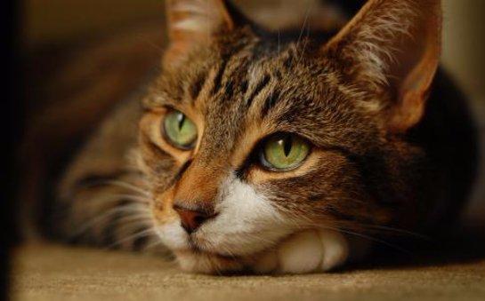 Кот предупредил хозяина о пожаре