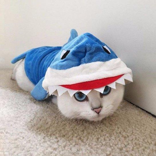 Кот с необычной формой глаз стал новой звездой интернета