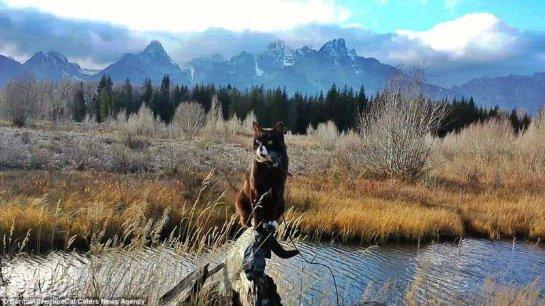 Знаменитый кот-путешественник посетил самые красивые места в Америке