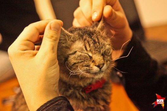 В воронежском котокафе живут котики с тяжелыми судьбами