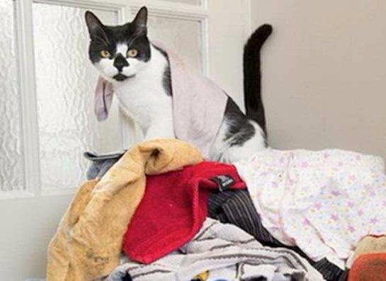 В Британии живет кот-клептоман
