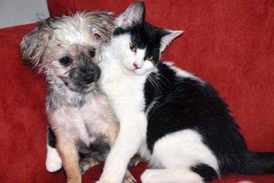 Кот и пес подружились в приюте