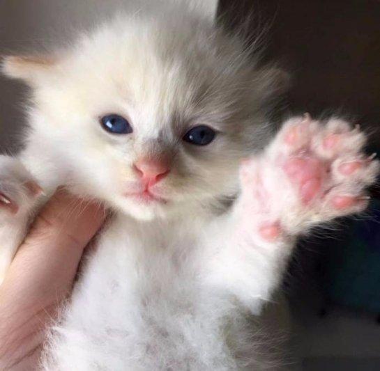 В Род-Айленде спасли котенка, который застрял между камней