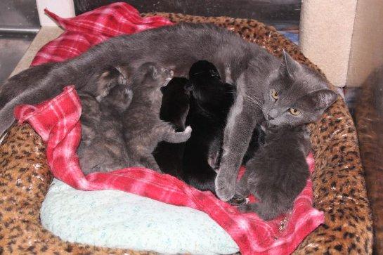 Кошка стала мамой для щенят