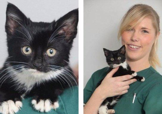 В Великобритании спасли котенка, который застрял в мусорном баке