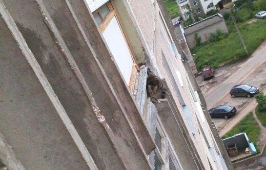 В Твери спасли кота, который застрял в карнизе