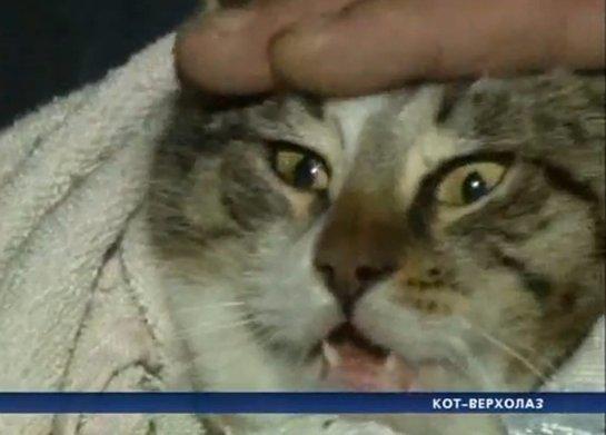 Сотрудники одесской ЧС спасли кота