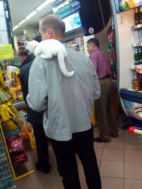 Житель Белово гуляет с котом на плече