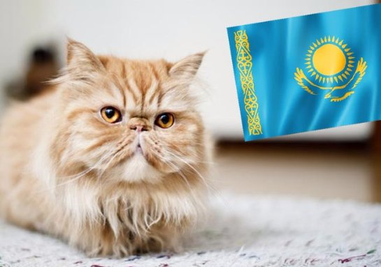 Жителя Новосибирска задержали за то, что он хотел нелегально пересечь границу вместе со своим котом
