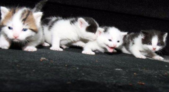 В машине, которую хотели разрезать на металлолом, нашли котят