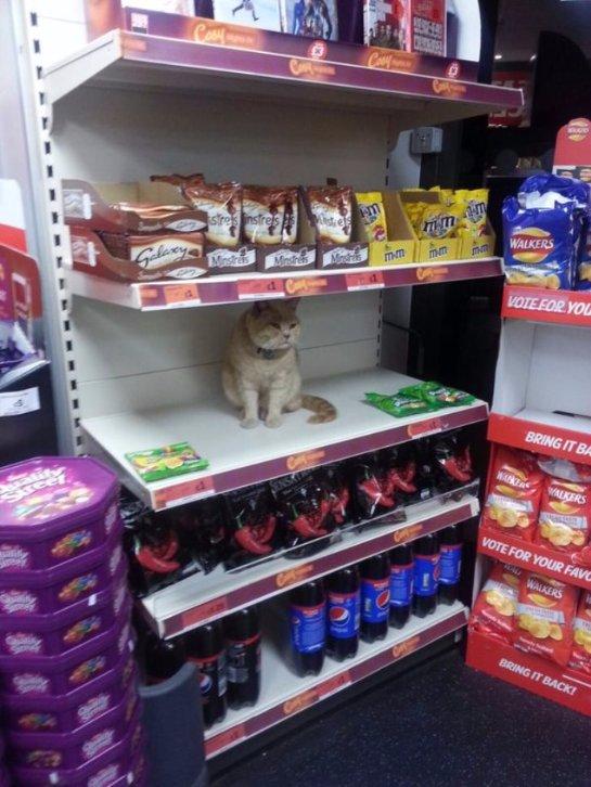 Кот, которого нереально выгнать из магазина