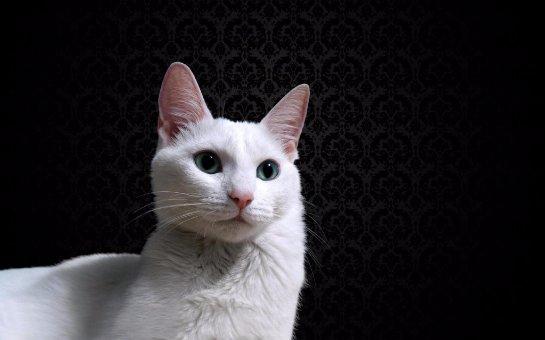 Кот, который не дает хозяину сидеть за компьютером, cтал новой звездой интернета