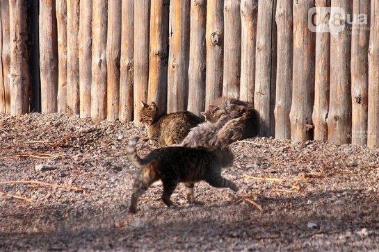 В Одесском зоопарке кошки воруют еду у тигров