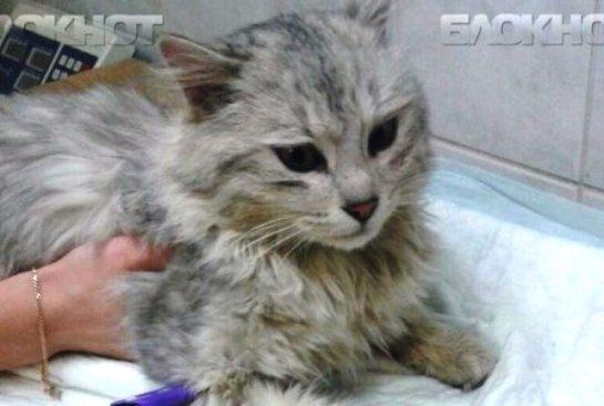 В Волгограде спасли примерзшего к дереву кота