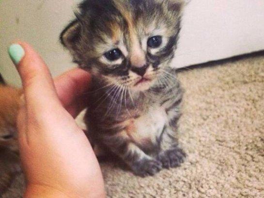 История о самом печальном котёнке