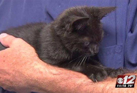 Две девушки спасли котенка, которого выкинули из машины