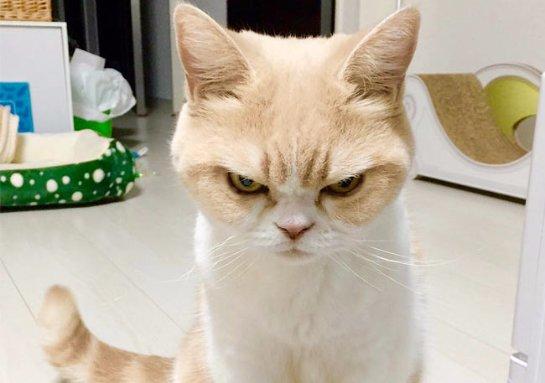 Новая злая кошка покорила интернет-пользователей