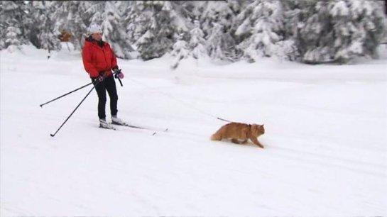 Кот-лыжник стал звездой Facebook
