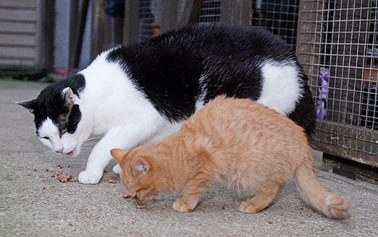 Кот Иуда ищет хозяина