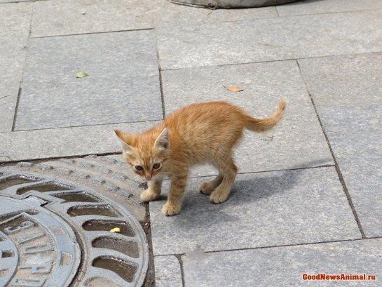 В Магнитогорске водитель трамвая спасла рыжего котенка