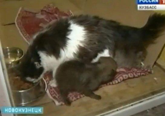 В Новокузнецке кошка заменила маму волчонку