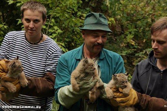 В Брно появились на свет три канадские рыси