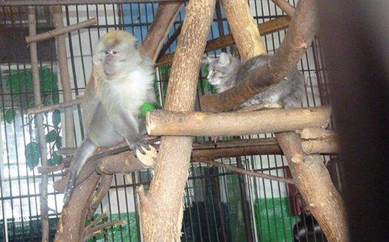 Кошка и обезьяна подружились в Большереченском зоопарке