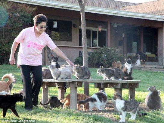 В Калифорнии женщина содержит 700 кошек