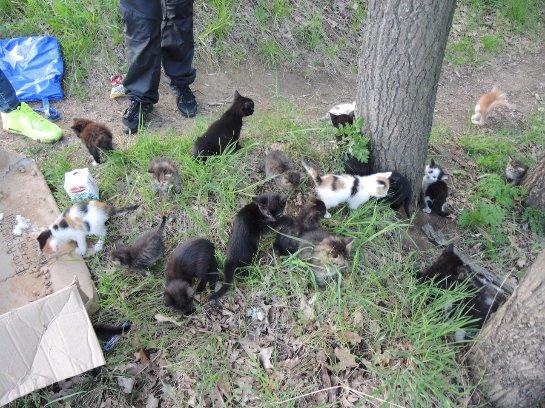 В Курске спасли 30 котят