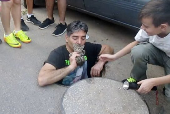 Спасение кота в Израиле