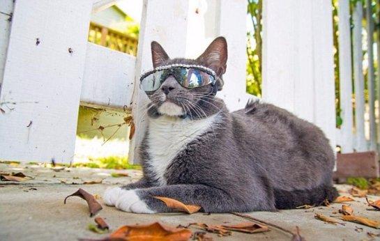 Кот Бублик в солнцезащитных очках покоряет интернет-пользователей