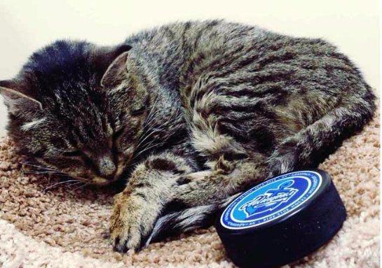Кошке Матроске прописали специальную диету из-за болезни почек