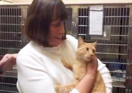 В США кошка вернулась домой после 8 лет отсутствия
