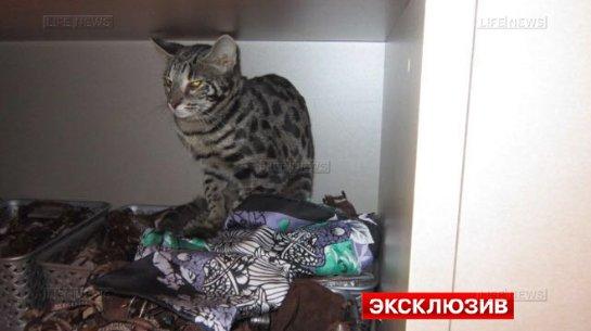 Бенгальский кот разгромил бутик в Шереметьево