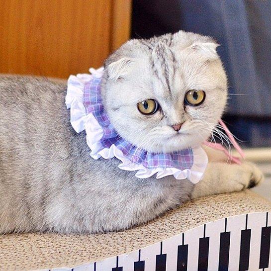 Малышка Пи- еще одна грустная кошка