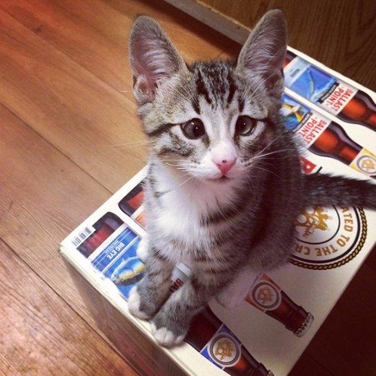 Котенок Бум с очень обеспокоенным взглядом
