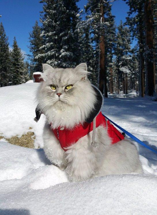Кот-путешественник Гэндальф