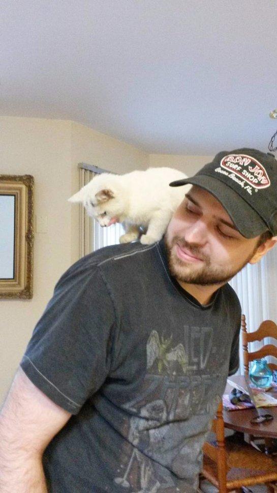 Парень помог бродячему котёнку