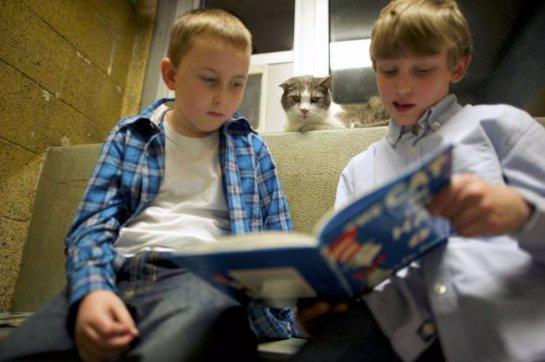 Коты учат американских детей читать