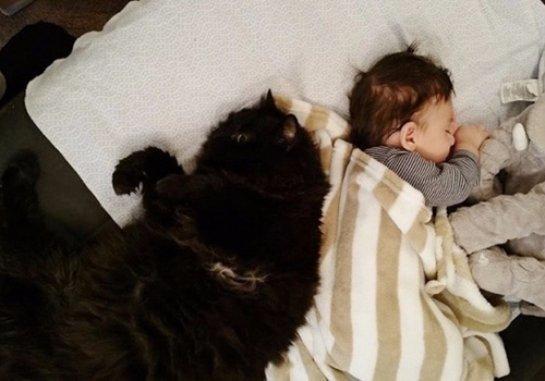 Кошка полюбила ребенка, пока он был в утробе матери