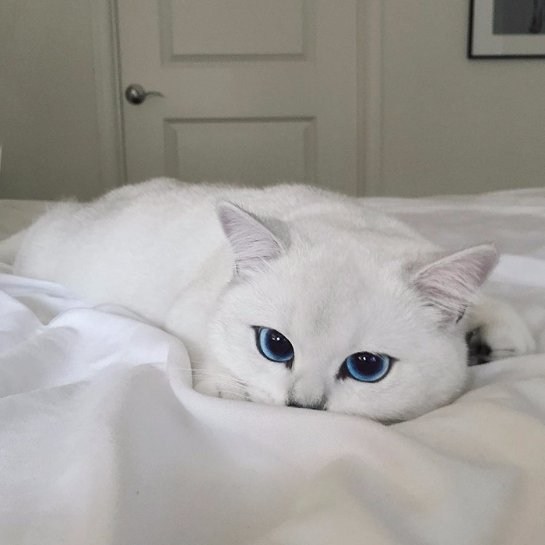 Кошечка Коби признана самой очаровательной в мире